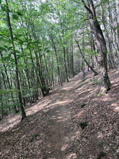 Noch mal Wald