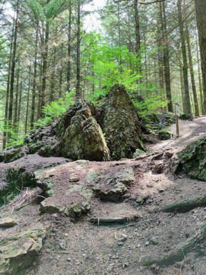 Bärenhöhle oder Geheimausgang der Burg?