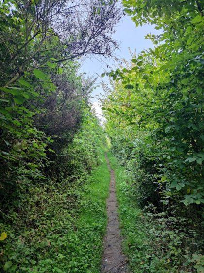 Nach und nach senkt sich der Weg wieder ins Tal hinab