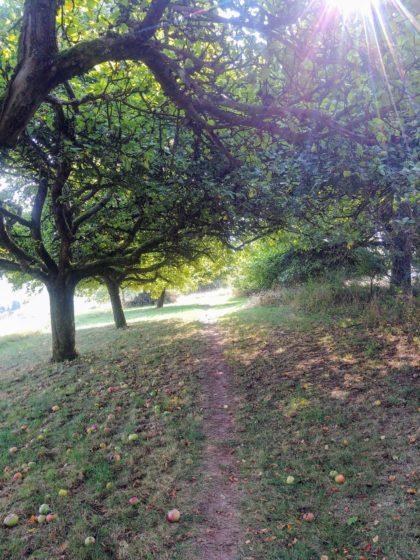 An Apfelbäumen vorüber wandern wir in Richtung Berschweiler