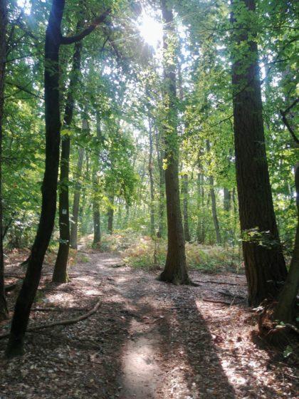 Kurz hinter dem eigentlichen Start - wunderbarer Wald