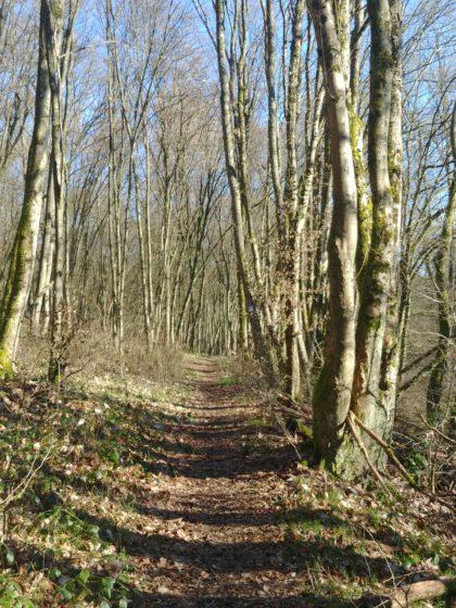 Es folgt eine lange Passage durch schönen Wald