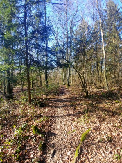 Immer noch diese Waldpassage