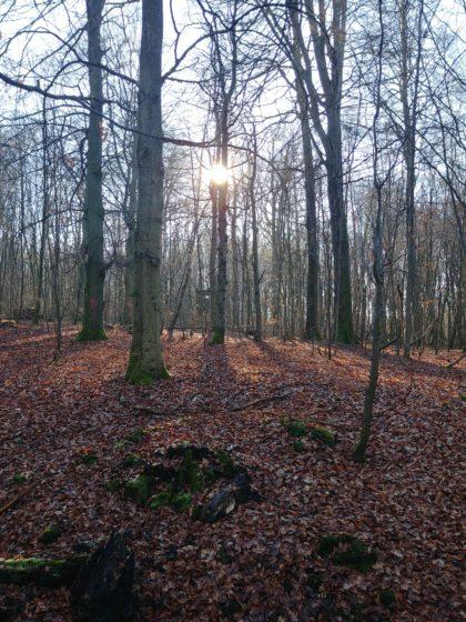 Auch hier beinahe ein Herbstwald