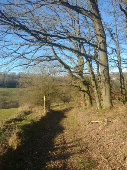 Der Waldanteil ist zwar recht hoch bei diesem Wanderweg, aber es gibt auch viele andere Passagen