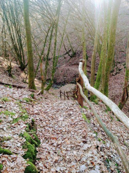 Die Schlucht beim Lochwiesbach