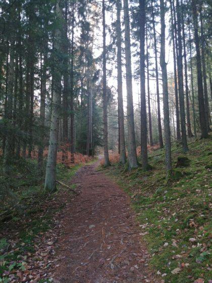 Der rund einen Kilometer lange Anstieg zum Hoxberg hat begonnen