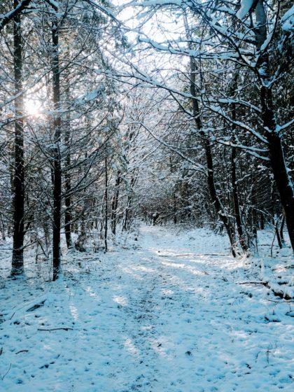 Und weiter durch den Winterwald