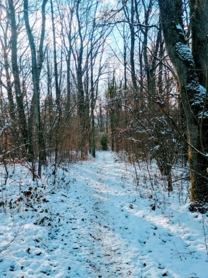 Die letzten ein, zwei Kilometer verlaufen wieder durch winterstillen Wald