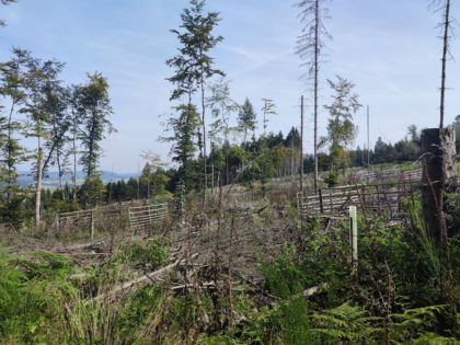 Leider ein immer häufigerer Anblick in den Wäldern
