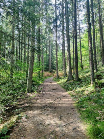 Der rund 1 km lange Anstieg zum Hoxberg beginnt