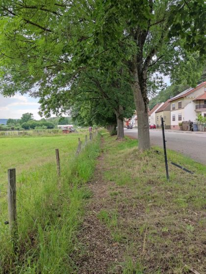 Am Ortsrand von Beckingen