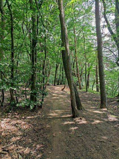 Viel Wald, gut an einem heißen Sommertag