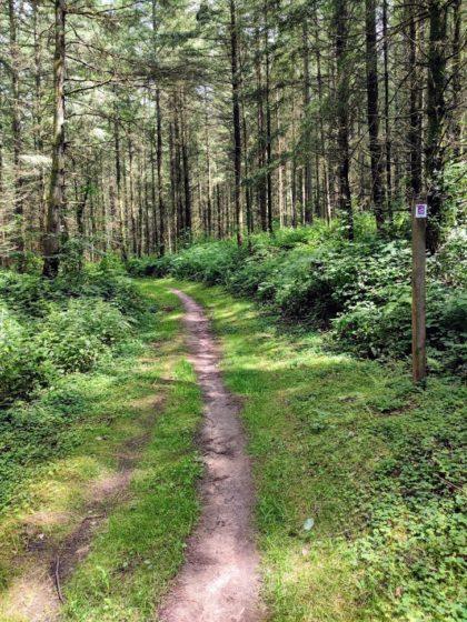 Immer noch schöner Wald