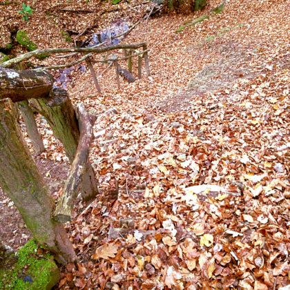 Die Wege verschwinden oft fast völlig unter dem Laub