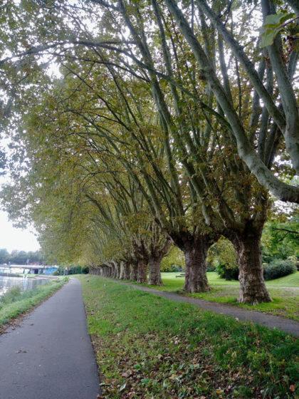 Drei Jahre später: Der Saaruferweg ist sicher eine der schönsten Stellen Saarbrückens