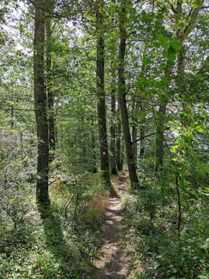 Wie gehabt - schmale Pfade + heller Wald
