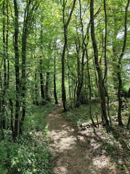 Insgesamt ist der Tiefenbachpfad ca. 15 km lang