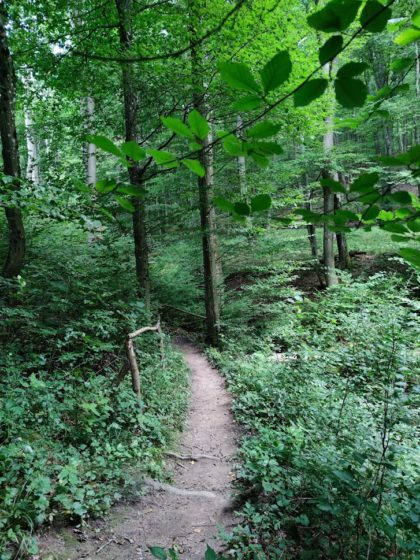 Lange Waldabschnitte