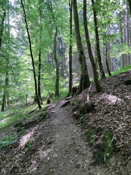 Man kann nur hoffen, dass dieser schöne Wald erhalten bleibt in Zeiten des Klimawandels