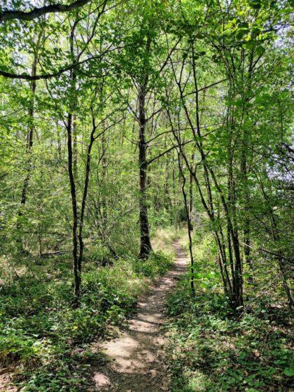 Heller Wald
