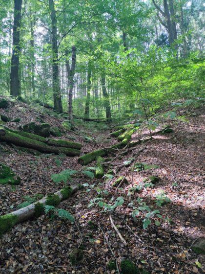Blick in die Tiefe des Waldes