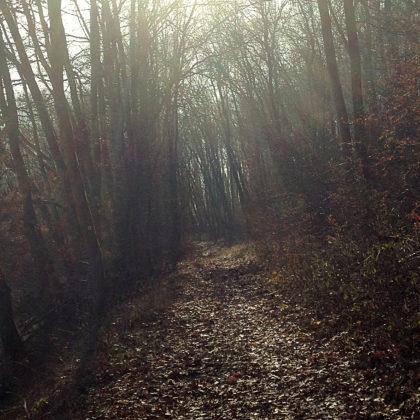 Mystisches Licht