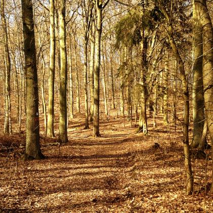 Länge des Wildgrafenweges: 13,3 Kilometer