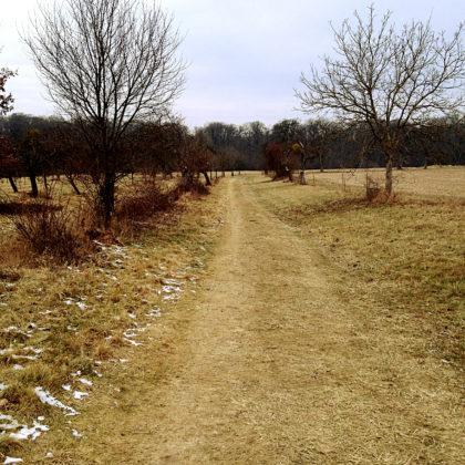 Der Druidenpfad ist zwar kurz, bietet aber durchaus landschaftliche Abwechslung