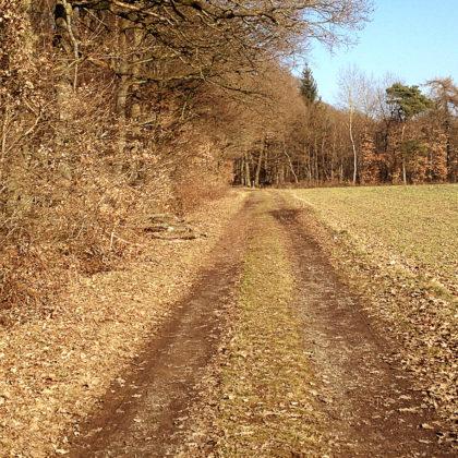 Immer wieder Passagen entlang des Waldes