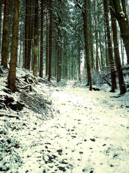Quer durch die Stadt, dann endlich Wald