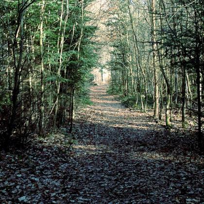 Waldkorridore...