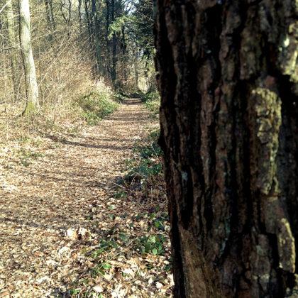 Ein schöner Wald in Anbetracht der Jahreszeit