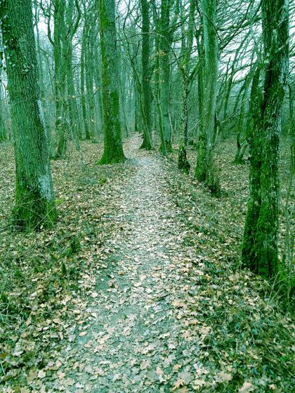 Dann wieder ein schmaler Waldpfad