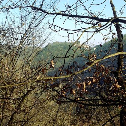 Schloss Dhaun liegt auf einer bewaldeten Höhe über dem Kellenbachtal
