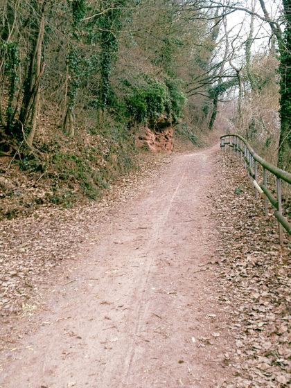 Eine kurze Waldpassage