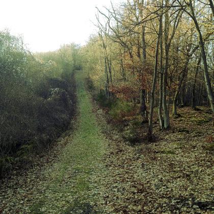 Die letzten Kilometer des Wildgrafenweges