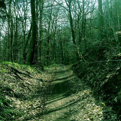...in einem Wald bei Mettlach