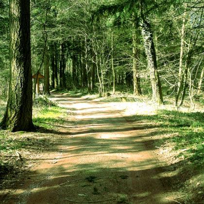 Ganz netter Frühlingswald