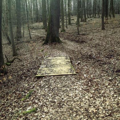 Der Wald ist zwar kein richtiger Winterwald mehr, aber er wirkt wie ein nach allen Seiten offenes Gebäude