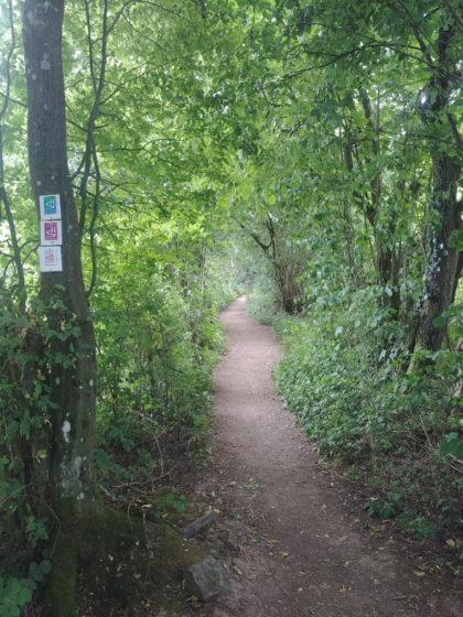 Auch der Saar-Hunsrück-Steig führt hier entlang