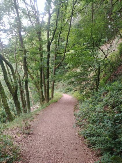 Nach Pfaden über Stock und Stein jetzt ein komfortabler Waldweg