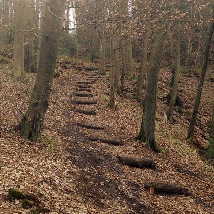 Aus dem Schönbachtal wieder hinauf
