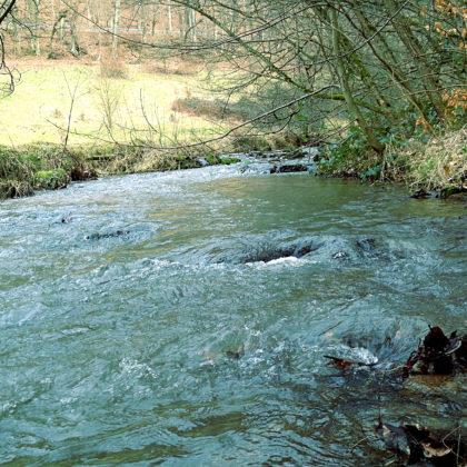 Im Schönbachtal