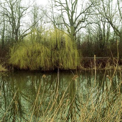 Blick zum jenseitigen Ufer hinüber