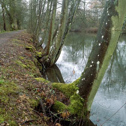 Uferbaumstillleben