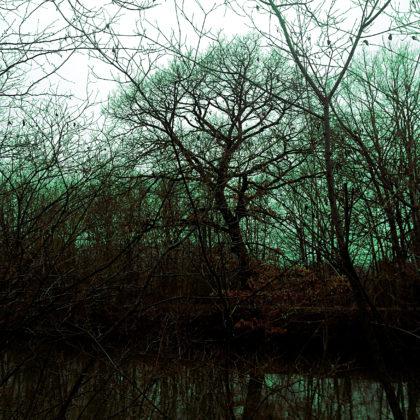Jenseits dieser Bäume fließt die Mosel
