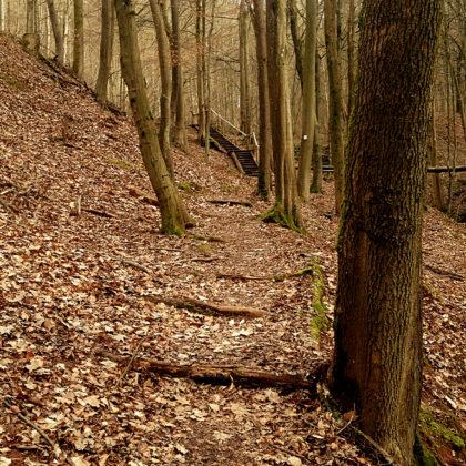 Der Brunnenpfad ist ca. 15 Km lang und führt zu einem großen Teil durch Wald