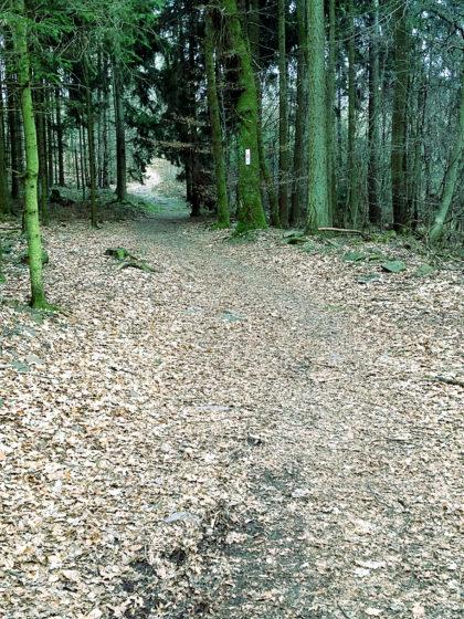Hinein in den Wald