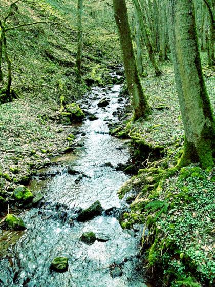 Das Steinbachtal